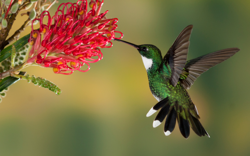 A picture of a hummingbird