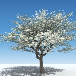 Memorial Tree Urns: Plant a Tree from a Loved One's Remains