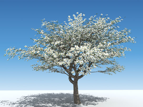Plant A Tree Memorial
