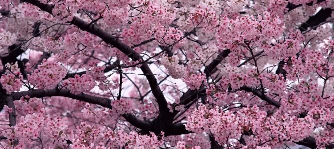 Memorial Trees: 16 Varieties