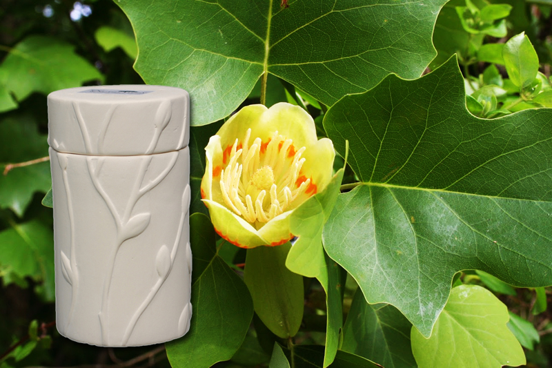 Tulip Poplar Tree Urn Seeds
