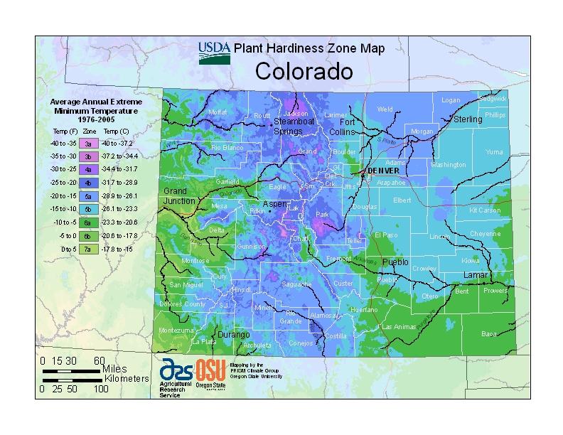 Memorial Tree Urns For Colorado
