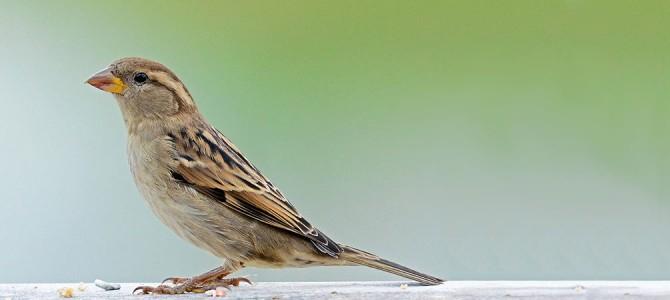 Military Memorial Gift: Cedar Wood Bird Feeders