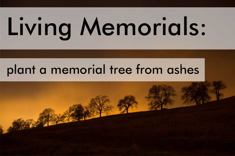 Plant a memorial tree from ashes