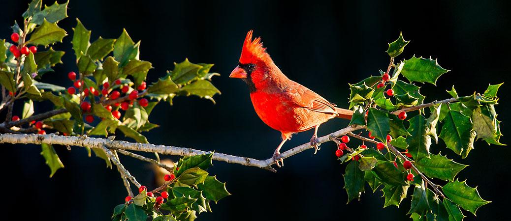 Cardinal memorials