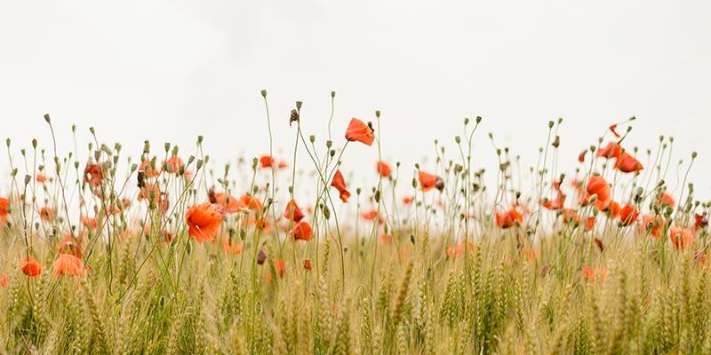 Flower memorials