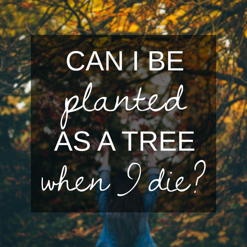 Planting memorial trees
