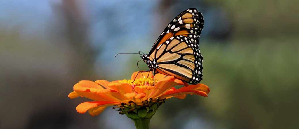 Butterfly Cremation Urns in the USA