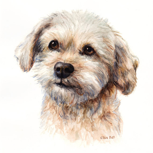 Pet Sympathy Gifts & Memorials: Custom Pet Portrait