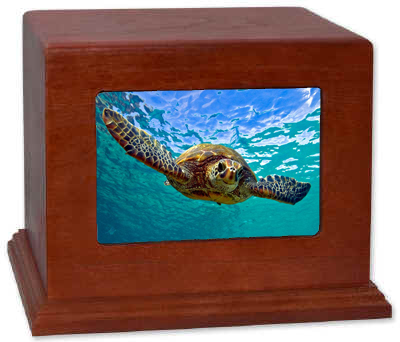 DIY Turtle Urn