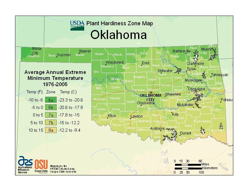 Memorial Tree Urns for Oklahoma
