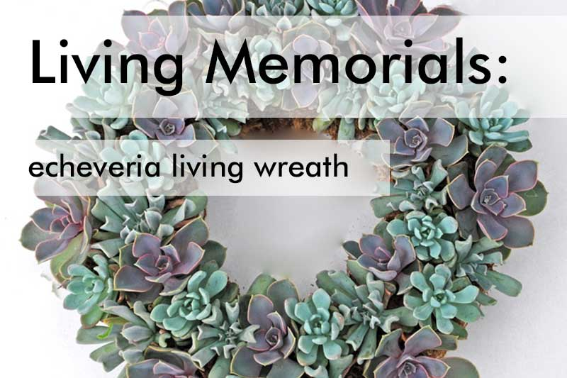 Living Sympathy Wreath
