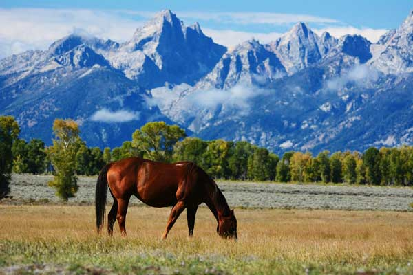 Horse Grazing in Wyoming