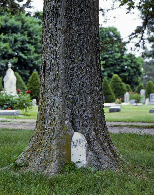 Interesting Funeral Photos - Tombstone Tree