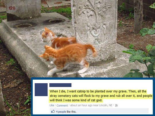 Catnip Funeral Humor