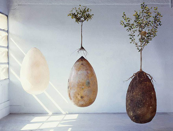 Burial Pods to Grow Trees