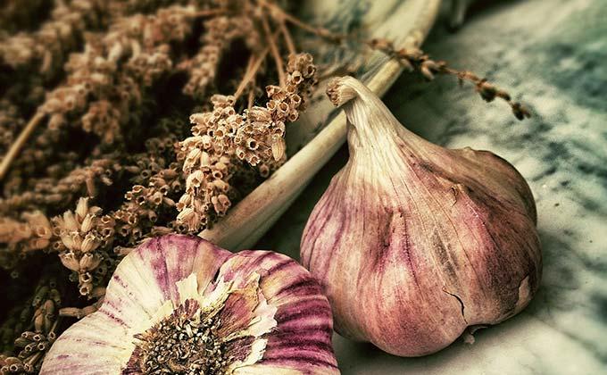 Plant Flowers - Dwarf Iris Bulbs