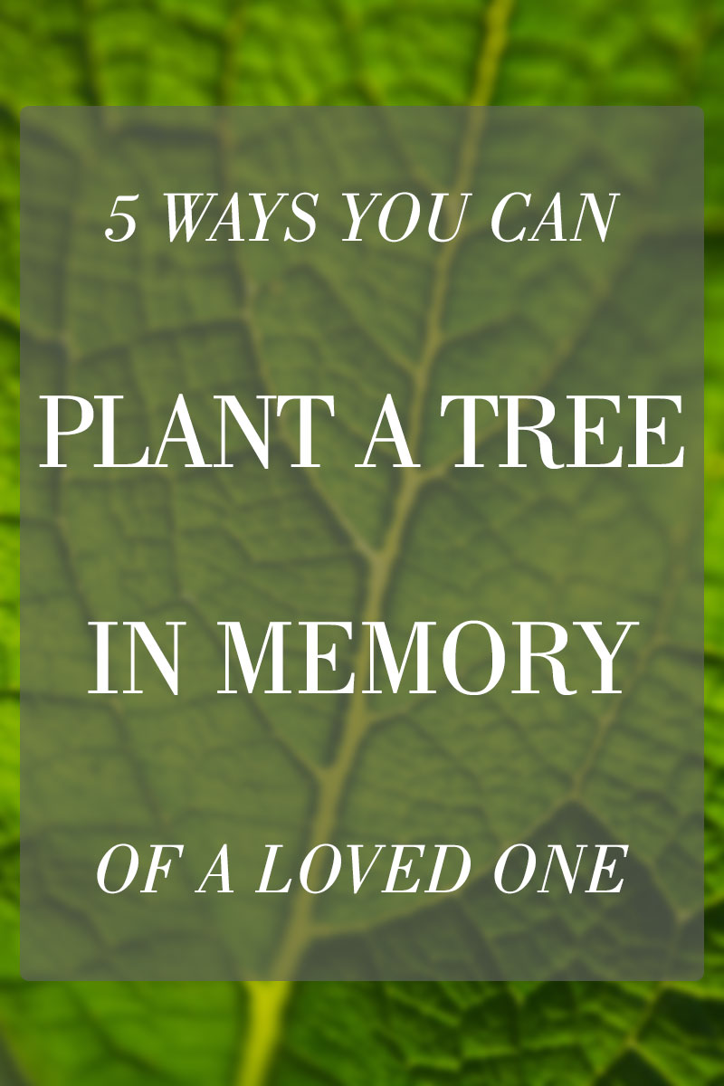 How to Plant a Memorial Tree in Honor of a Loved One