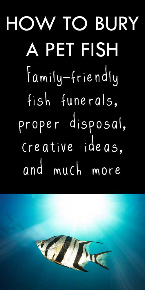 Family-friendly fish funerals & burial