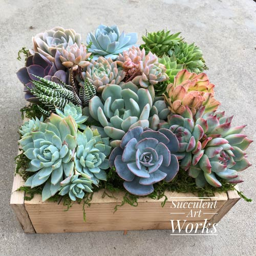Sympathy Gift Succulents
