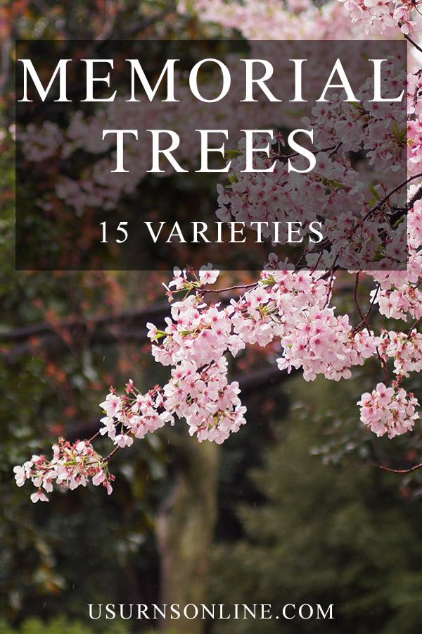 Memorial Trees: 15 Varieties