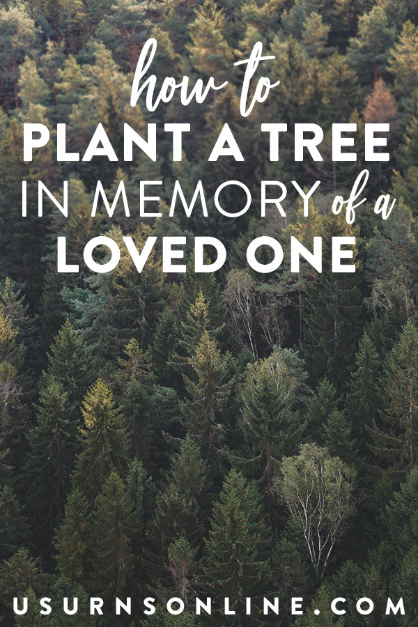 How to plant a tree in memory of a loved one