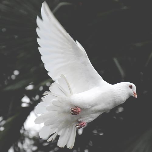 Ideas for Memorial Service - Release Doves