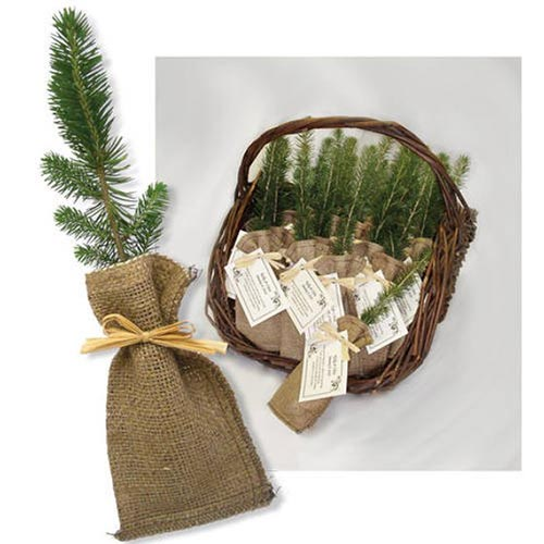 Memorial Tree Seedlings - Funeral Favors