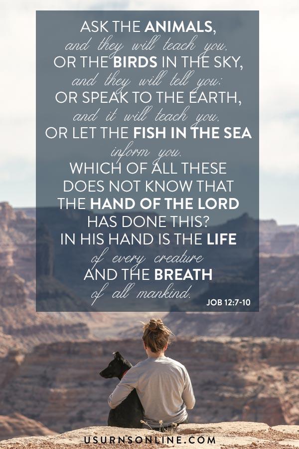 Pet Loss Scripture Quotes