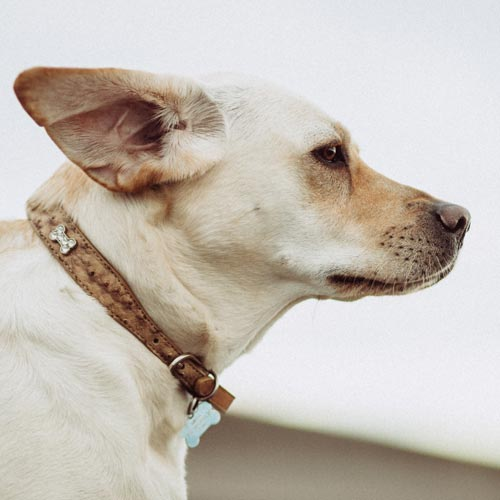Turn your pet's collar into a memorial bracelet