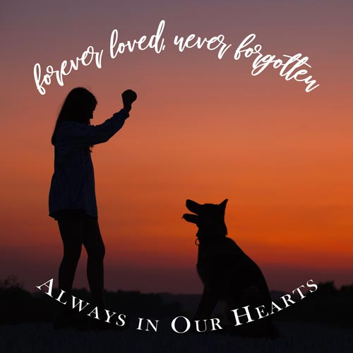 Pet Loss Quotes, Poems & More to Honor Your Furry Friend ...