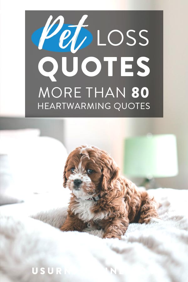 Pet Loss Quotes