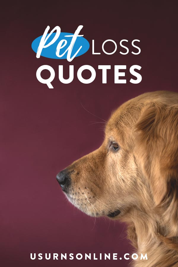 Pet Loss Quotes Poems More To Honor