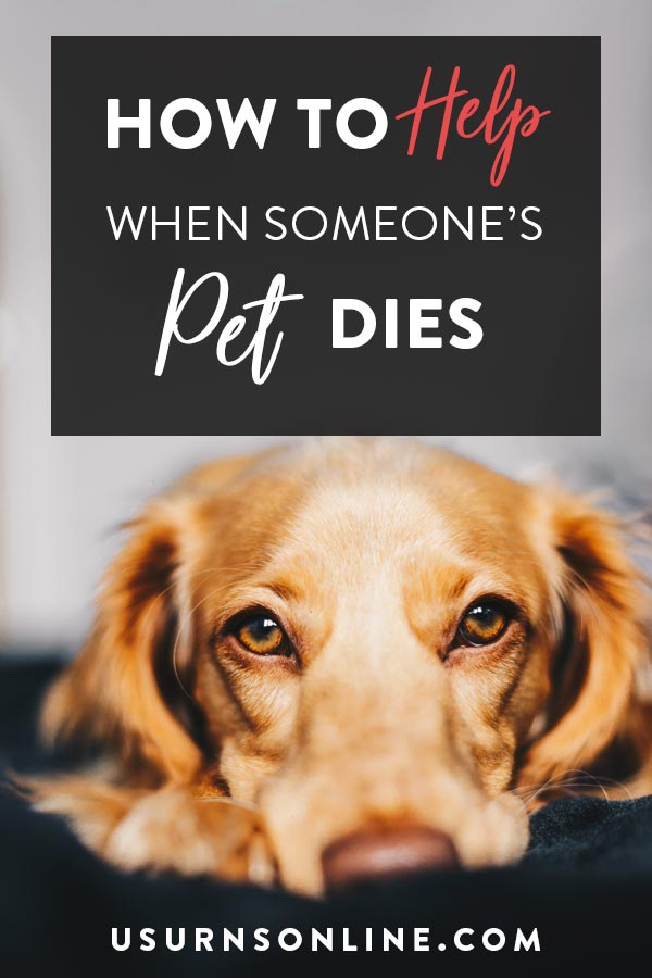 How to help a friend whose pet has dies