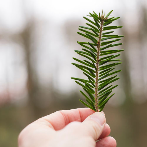 Memorial Tree Sympathy Gifts for Men