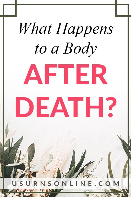 What Happens to a Body After Death?