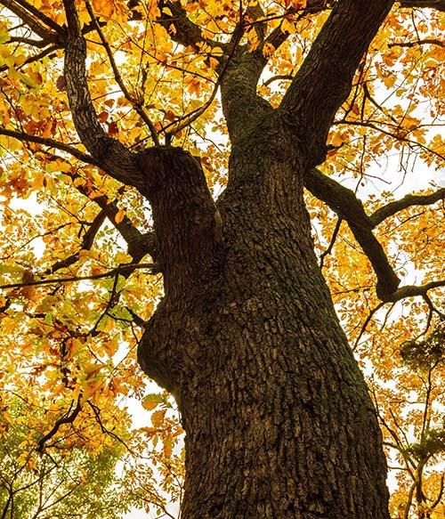 Memorial Tree Ideas